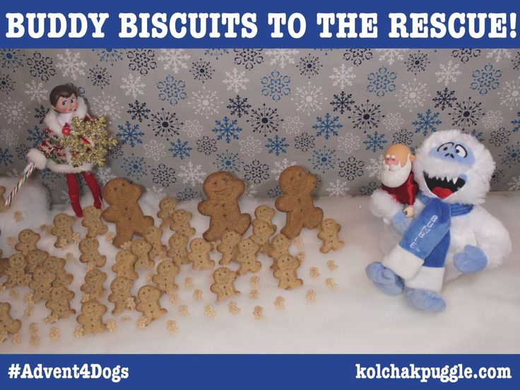 Find out how the Gingerbread Buddy Biscuits saved Santa and enter to win a prize pack of tasty treats for your dog. US/CAN 12/31 #Contest Entry