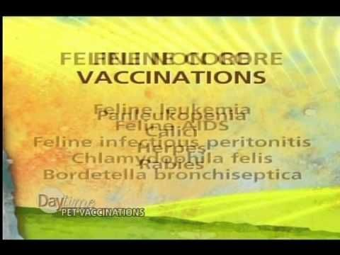 Veterinarian, Dr. Melissa Webster, speaks about the different Vaccinatio...