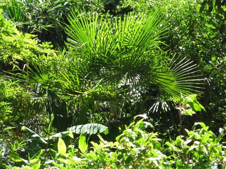 Vegetation in back yard