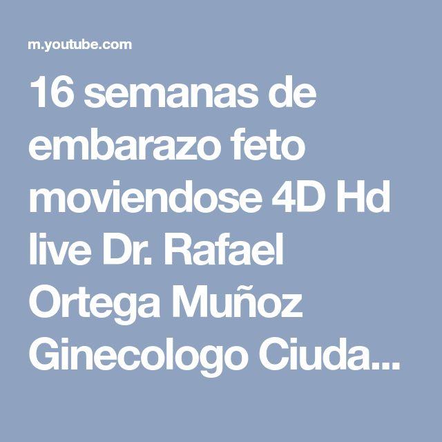 16 semanas de embarazo feto moviendose 4D Hd live Dr. Rafael Ortega Muñoz Ginecologo Ciudad Real - YouTube