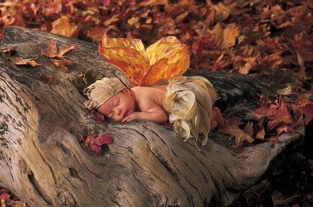 baby picture idea: Anne Geddes, Annegeddes, Babies, Idea, Fairies, Geddes Babies, Fairy, Photography