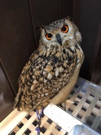 Wata Wata Owl Cafe, Nara: See 12 reviews, articles, and 15 photos of Wata Wata Owl Cafe on TripAdvisor.