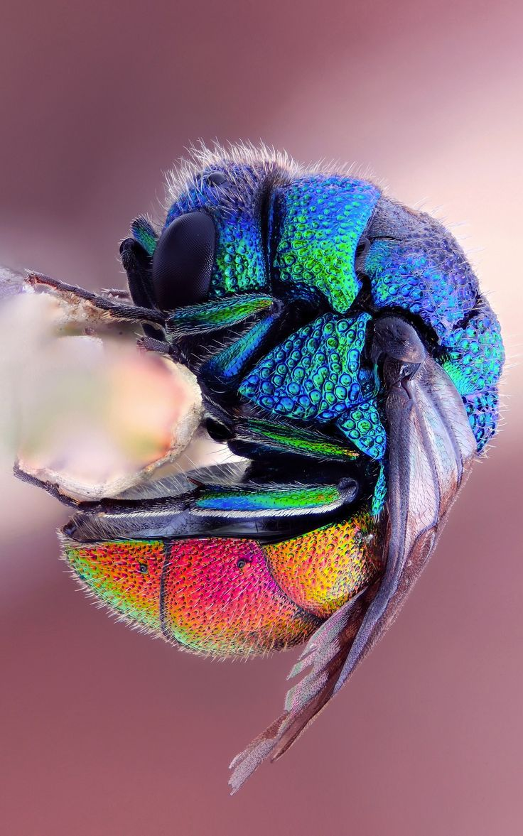 Colorful Bee...what an awe inspiring artist our Creator is!