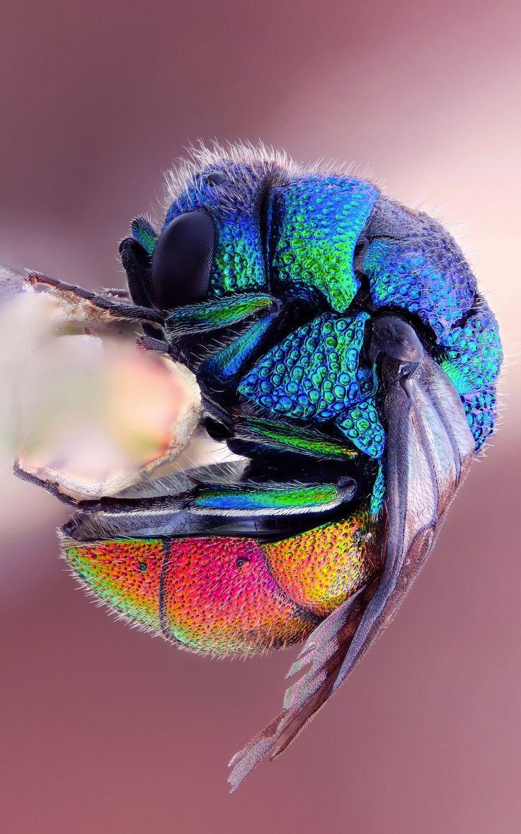 Fantastični insekti - Page 8 7443717f840058cfccd2b7a374b06790
