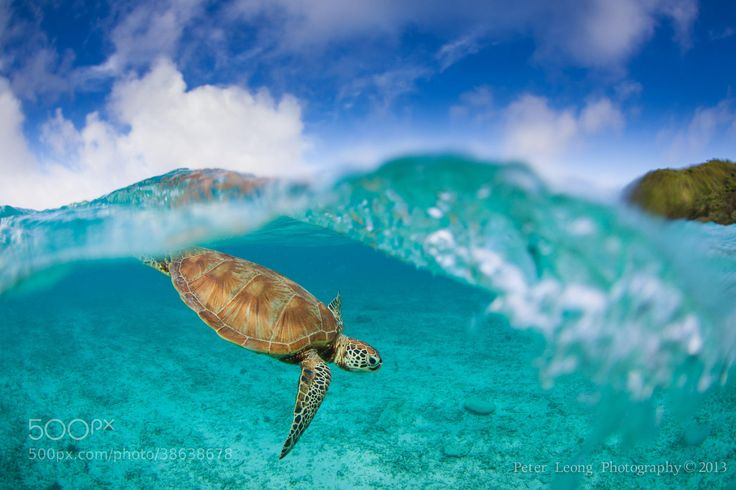 Zamami island locals by Pete Leong on 500px.com