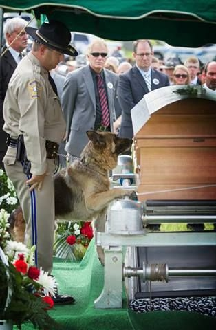 Officer Jason Ellis was tragically killed during an ambush on Saturday. During his funeral, all of his fellow officers, families and friends showed up to say goodbye to the kind-hearted officer. The most noticeable mourner, however, was Figo. Figo was his canine partner who was obviously overcome with grief. Dogs know when their close friends die, and the sadness on his face is says it all.