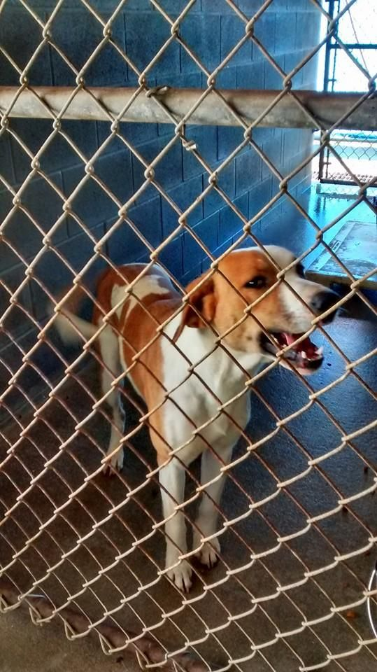 ADOPTED!! Meet Bubba, an adoptable Hound looking for a