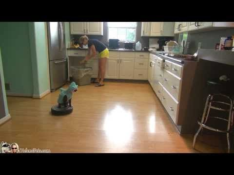 Just A Cat, Dressed As A Shark, Riding A Roomba! #sharkweek