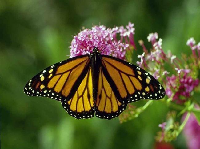 Картинки бабочек красивых цветных - a989
