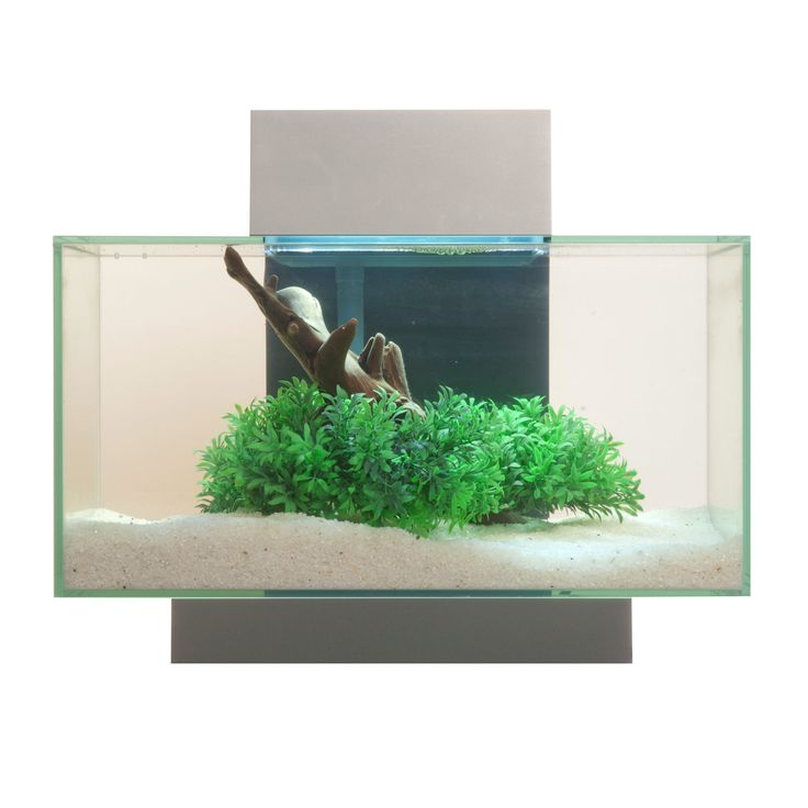 Schön Beautiful Contemporary Aquarium. Fluval Edge Aquarium Kit In, Kuchen Ideen
