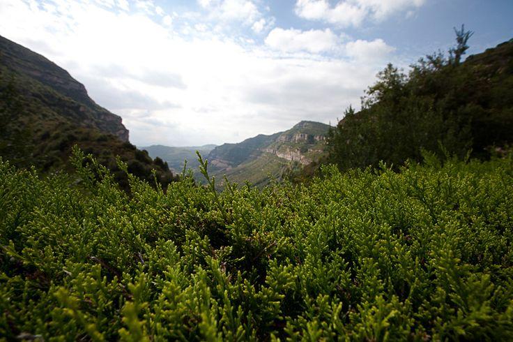 Волшебное место - Сан Мигель дель Фай - путешествия и прочее