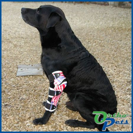 OrthoPets custom fabricates your dog elbow brace for arthritis and other leg injury or instability. As seen on Animal Planet.