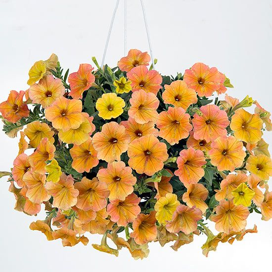Range Flower Baskets : Images about hanging baskets on
