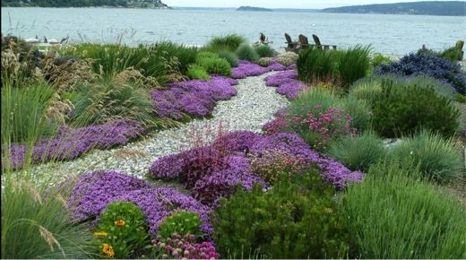 blue oat grass,ceanothus,Galliardia,Heliotrichon sempervirens,Iris Siberica,Miscanthus gracillimus,Thymus Serpyllum