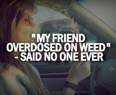 In order to overdose on cannabis, one must take around 40,000 x the amount they normally take per day, and if you've never smoked, that's 40,000 hits...too many for a person to take...and they can't even prove it will kill you because it's too hard to test!