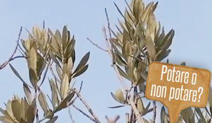 Oltre 25 fantastiche idee su rami di ulivo su pinterest - Giardinieri in affitto chi paga i lavori ...