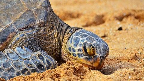 Higher sea levels are bad for endangered turtles : TreeHugger