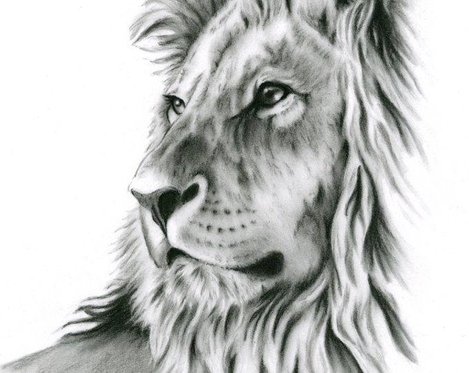 Houtskool tekening houtskool Print, Lion kunst, Lion tekening, schets van de Leeuw, houtskool Leeuw, Lion afdrukken