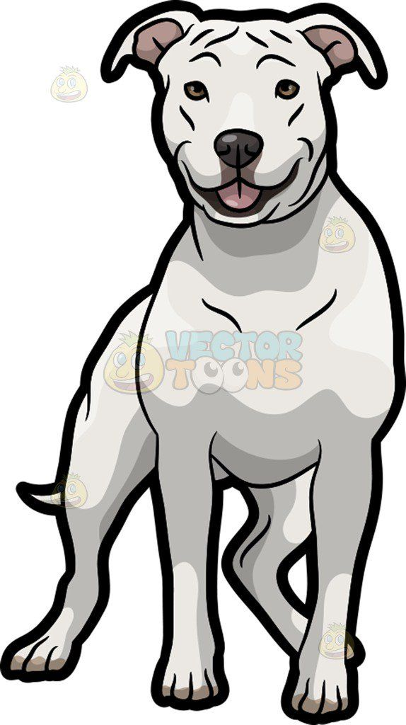 A White American Staffordshire Terrier Pet Dog Cartoon Dog Dog Animation American Staffordshire Terrier