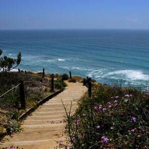 Torrey Pines State Natural Reserve: A user's guide