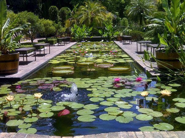 #nature#green#garden#relax#peace#beautiful#stellenbosch