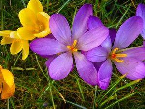 Gotas de Bach : Mezcla Floral que potencia la Belleza Femenina