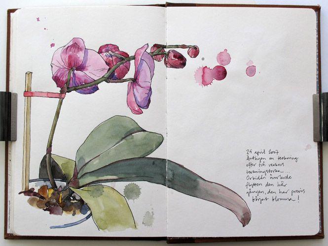 Orchids #watercolours / Orchidee #acquarelli #aquarelle - Art by Nina Johansson