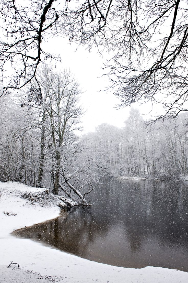 Snow falling on a lochside woodland