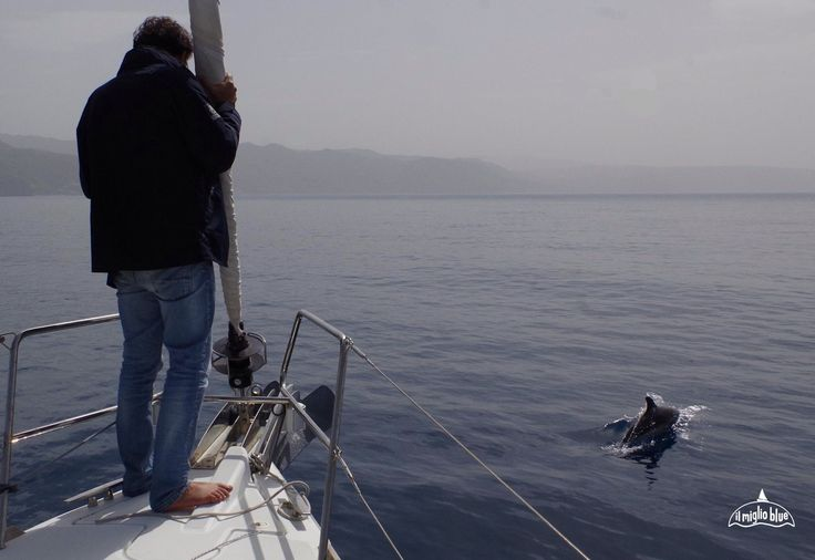 sailing with dolphins in Sicily