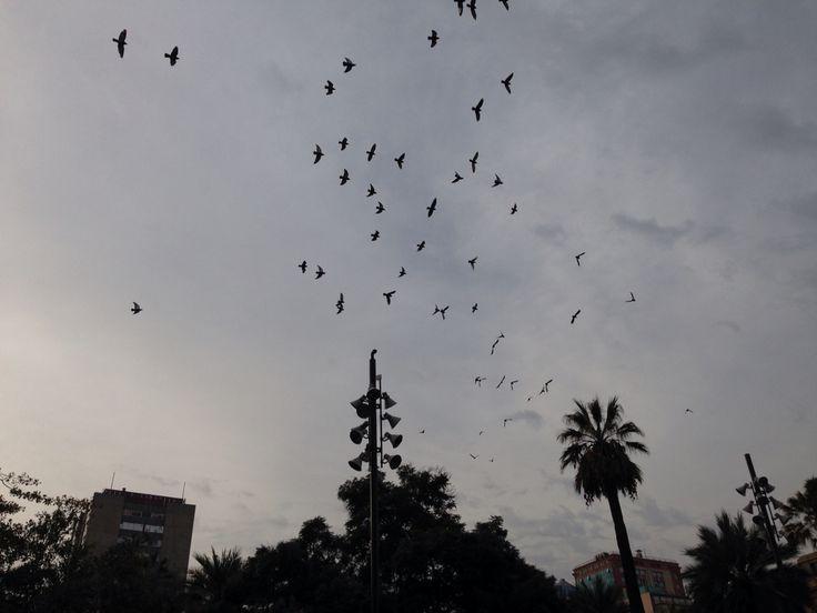 Plaza de Armas, Santiago del Chile.