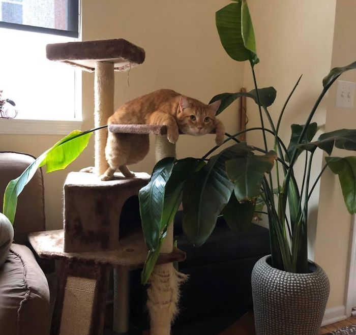 What S Wrong With My Cat Online Group Has Owners Posting Pics Of Their Malfunctioning Cats And Here Are 50 Of The Funniest Ones Cat Online Cat Owners Cats And Kittens