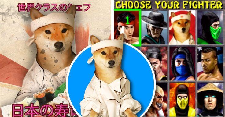 Los adorables perros esponjosos Shiba Inu han sido víctimas de los redditores de photoshop con esta imagen de chef oriental. ¡Es una épica batalla legendaria!