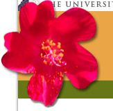 Native Plant Information Network- Lots of great info on native plants across the US