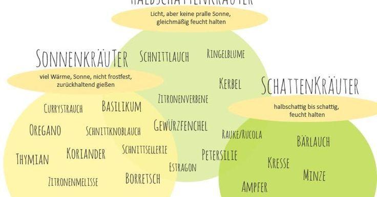 Krauter Standort Ubersicht Krauter Kuchenkrauter Sonne Schatten Halbsc Garten Garten Pflanzen Topfpflanzen Terrasse