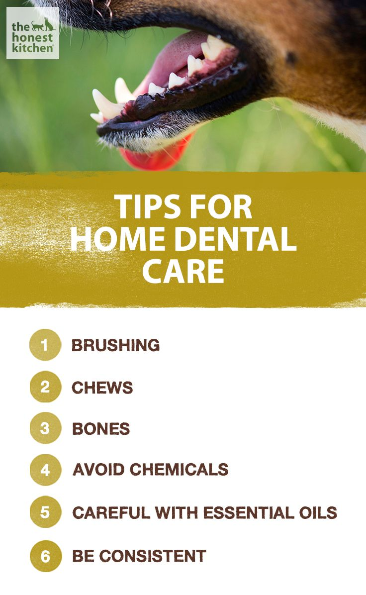 Teeth are an important part of health care for pets. Unfortunately, they're also…  Check out our dog training tips at http://bestdogcratesandbeds.com!