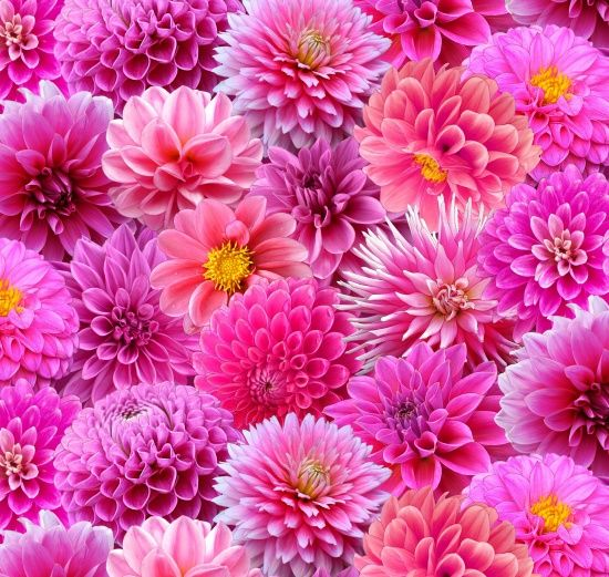 117 Best Dahlias & Other Flowers Images On Pinterest