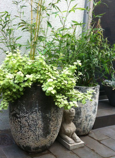 Strikingly gorgeous planters that appear as though they were dredged from the ocean just for you. The Aegean Line successfully blends antiquated charm with modern beauty. Each planter is unique, calcification coverage will vary from planter to planter.