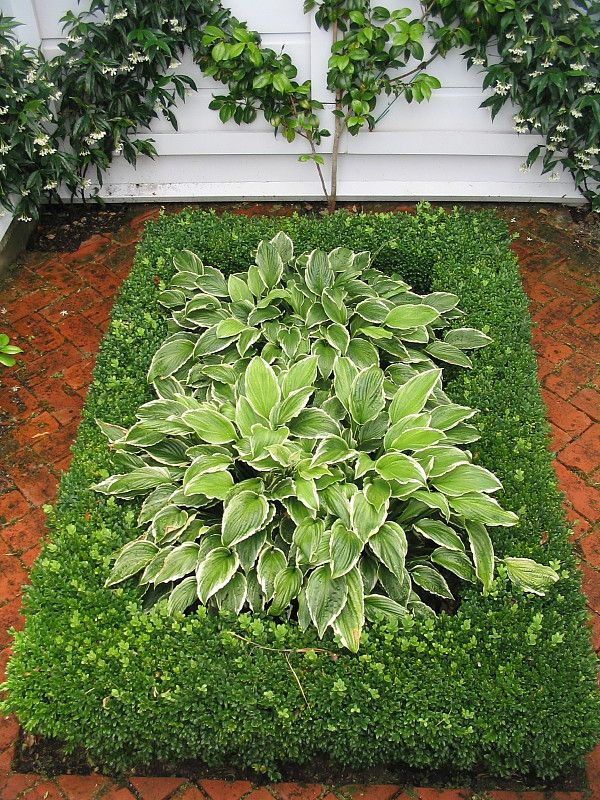 Garden Design Hedges 89 best a selection ~ designedhedge images on pinterest