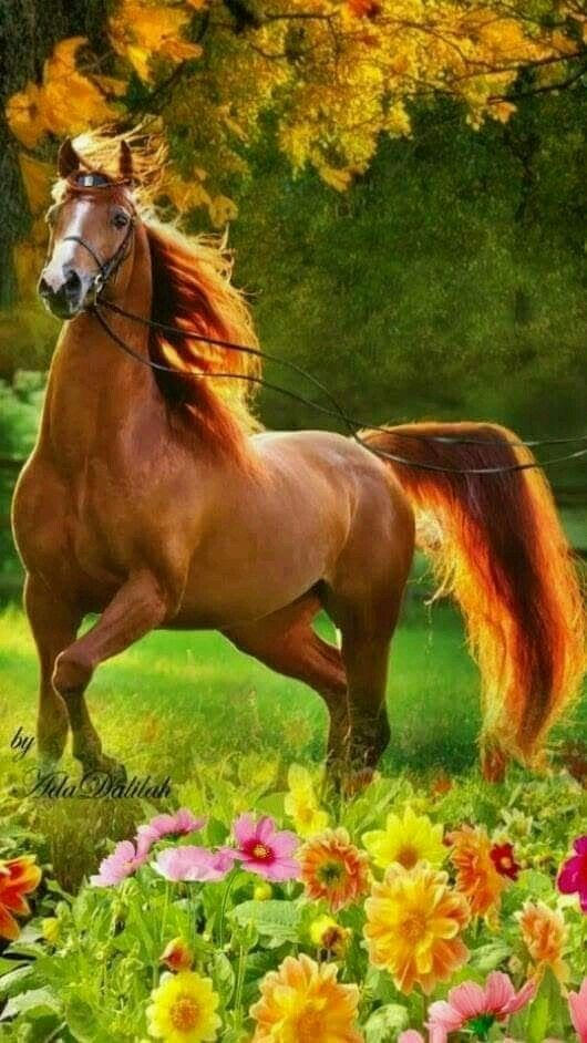 Schönes Pferd in einer wunderschönen Umgebung. Es wird viel Sperma ausgestellt.   – Animals