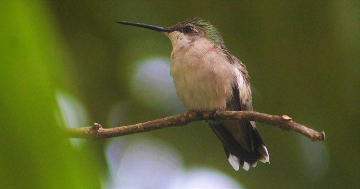 Hummingbird - by Angie Varona