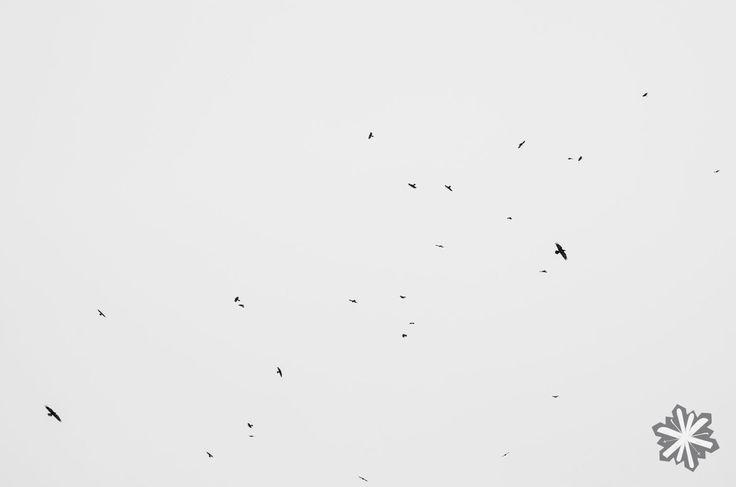 Ptácí / Birds