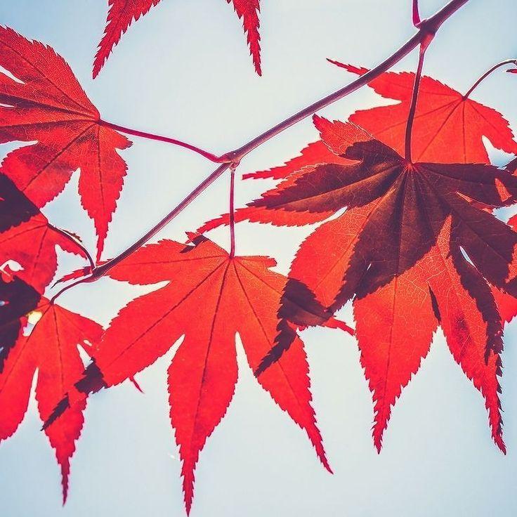 Auch wenn das Wetter heute nicht so super ist. Geh raus in den Wald. Sammle farbenfrohes Herbstlaub und bastle daraus eine kleine farbige Deko für dein Zuhause. Und schon sieht alles gleich viel besser aus  . . . #balance #spaziergang #achtsamkeit #mindfulness #fall #autumn #leaves #falltime #season #seasons #instagood #instaautumn #leaf #foliage #colorful #orange #red #autumnweather #fallweather #nature #healthymind #diy #cafecampfire