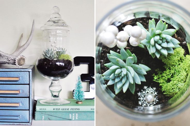 How to Turn a Candy Jar into a Terrarium via Brit + Co