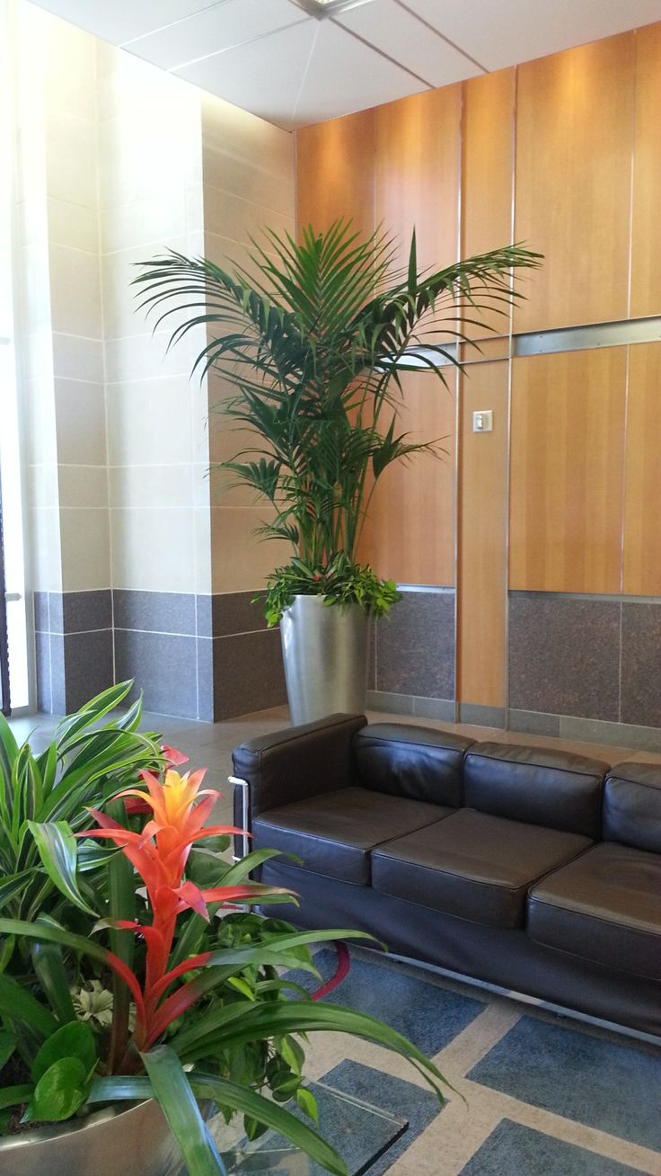 Garden Centre: Lovely Lobby Kentia Palm With Under Plantings. Marjan