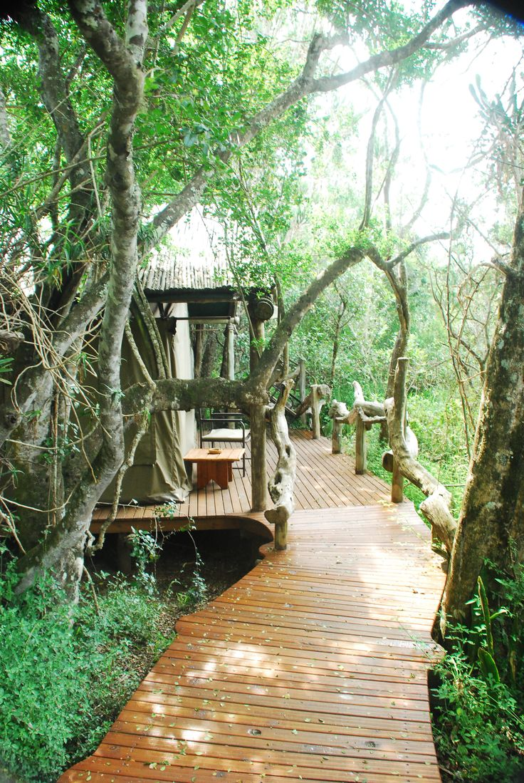The raised walkways to the 8 luxury tents are also good for the aged and wheelchair friendly. Sibuya Game Reserve Forest Camp reached via boat along the Kariega River from Kenton on Sea, Eastern Cape, South Africa www.sibuya.co.za