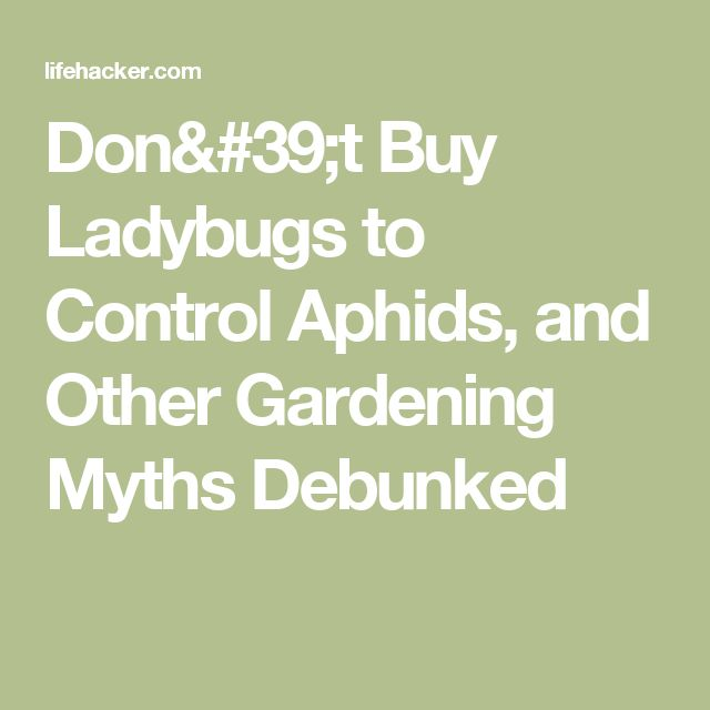 Don't Buy Ladybugs to Control Aphids, and Other Gardening Myths Debunked