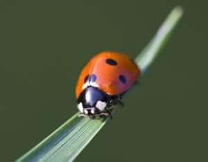 10 consejos caseros para plantas y jardines bien saludables: Atrae plaguicidas al jardín