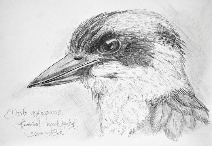 """© Angelika Stein Bleistiftzeichnung """"Lachender Hans"""", einer meiner Lieblingsvögel."""