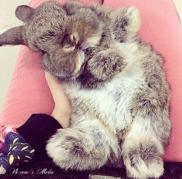 adorable cozy bun