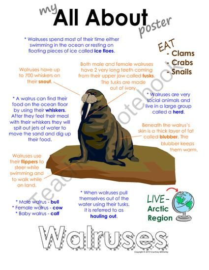 """My All About Walrus Book - (Arctic/Polar Animals) from Courtney McKerley on TeachersNotebook.com (9 pages)  - This """"All About"""" book will be a fun addition to your classroom and lessons on walruses.  Also offered in a bundle pack which includes the polar bear, Emperor Penguin, Arctic wolf and caribou. (Workbook, worksheet, printable, unit study, lesson)"""
